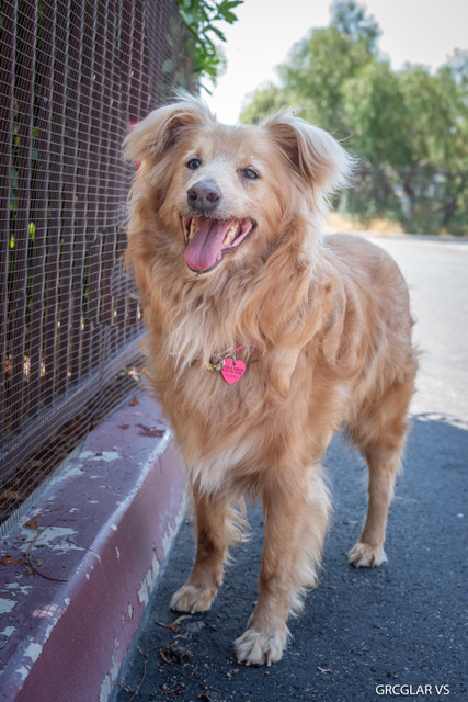 GRCGLAR: Here are some of the dogs we have available for
