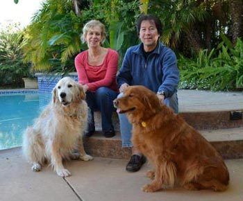 Adopt a Golden Retriever! GRCGLA Rescue